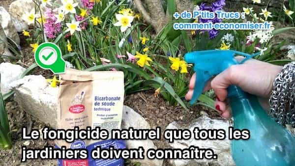 Le bicarbonate le fongicide naturel que tous les - Utilisation du bicarbonate de soude au jardin ...